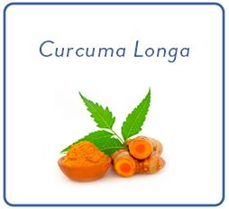 carré curcuma longa