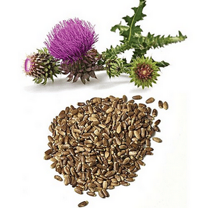 Milk thistle: Analysis of its properties and health benefits