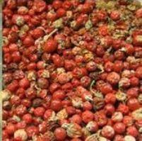 Baies d'ashwagandha, riche en kaempférol et catéchine