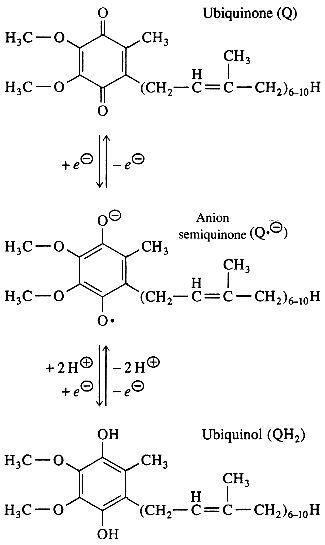 Les 3 formes de la CoQ10 suite à une réaction Redox : Ubiquinone - Semiquinone - Ubiquinol
