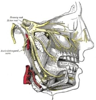 Douleur faciale