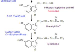 Structure chimique de la sérotonine et de la mélatonine