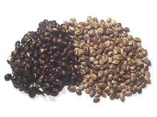 Les graines de chanvre sont riches en