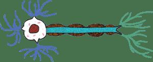 Le pourpier, un excellent protecteur des neurones