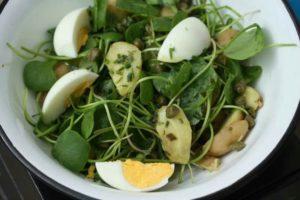 Le pourpier, une plante-légume peu calorique ultra nutritif, peut se consommer en salade