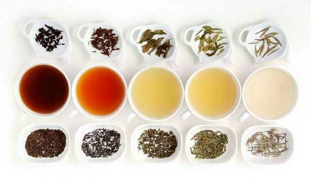 Les différents thés fabriqués à partir du Camellia sinensis