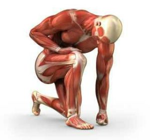 Myopathie, pathologie neuromusculaire qui se manifeste par une dégénérescence progressive des tissus musculaires