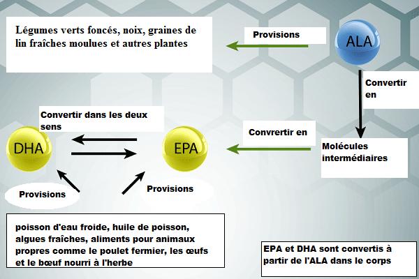 Les principaux types d'oméga-3