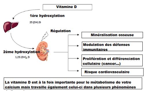 Les actions de la vitamine D contenue dans l'huile de foie de morue