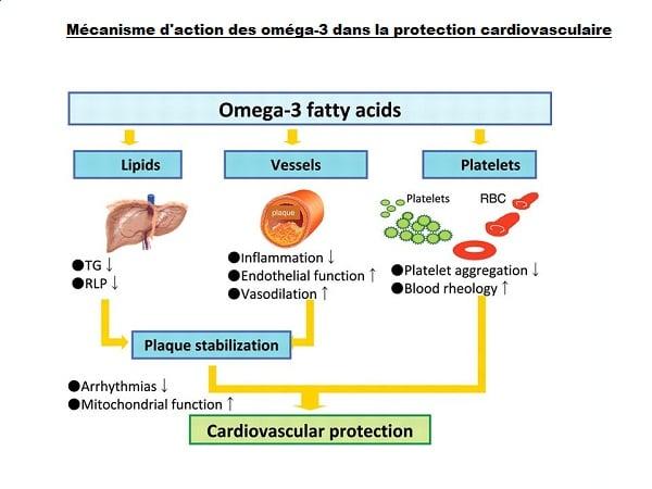 Mécanisme d'action des oméga-3 dans la protection cardiovasculaire