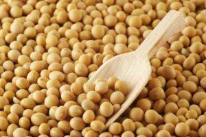 Les graines de soja sont riches en cystéine