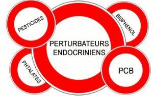 Les perturbateurs endocriniens imitent, bloquent ou changent les fonctions des hormones naturelles