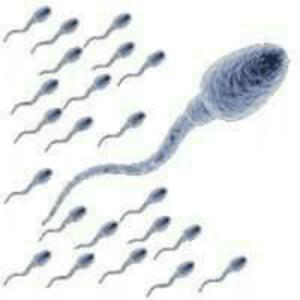 L'acide aspartique augmente le nombre et la qualité des spermatozoïdes