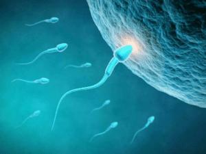 Asthénozoospermie, défaut de mobilité ou motilité des spermatozoïdes