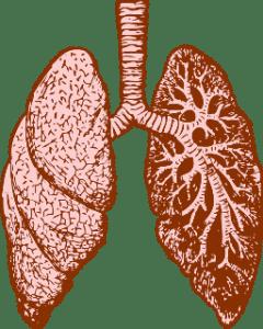 Le poumon assure le transfert gazeux entre l'air et le sang