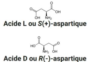 Les deux énantiomères de l'acide aspartique : L- et D-aspartique