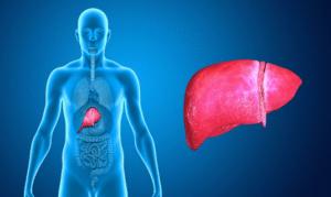 Le curcuma longa limite la progression de la cirrhose