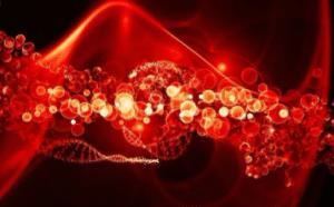 La garcinia prévient la dégradation des tissus en agissant comme un antioxydant et anti-inflammatoire