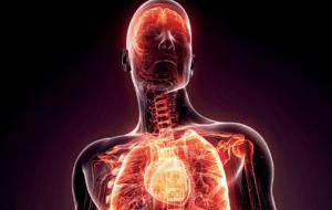 La carnitine possède une propriété anti-inflammatoire