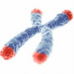 Telomere 2