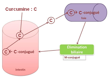 biotransformation curcumine