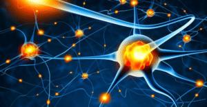 La rhodiola rosea protège le système nerveux