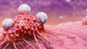 Les turmerosaccharides stimulent les défenses immunitaires