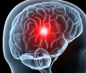 butyrate et neurogenèse