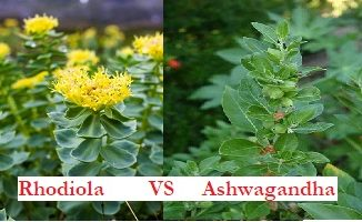 rhodiola et ashwagandha
