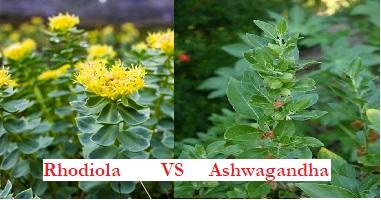 La rhodiola ou l'ashwagandha pour le stress ?