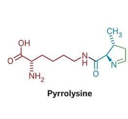 pyrrolysine
